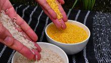 Kultainen riisi